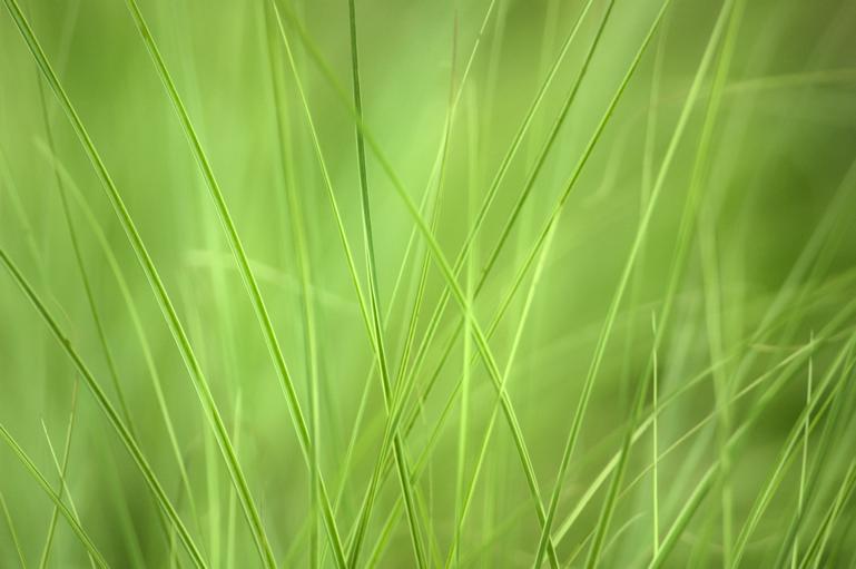 Sådan anlægger du en græsplæne
